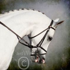 Arabian Dressage Horse  Grey Magic  10 x 10 Fine Art by fastwinn, $25.00
