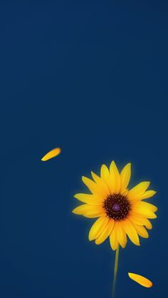 Yellow And Blue Flower IPhone Wallpaper