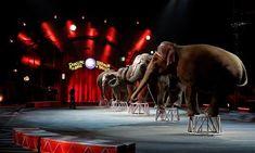 Petition : Pour l'interdiction des cirques avec animaux à Dijon