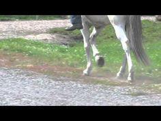 Mangalarga Marchador - Marcha Picada