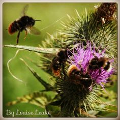 Bees sharing Photo by Louise Leake