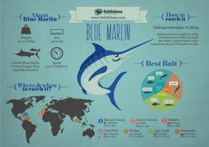 The Blue Marlin