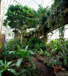 Forgotten Spaces: the Barbican Conservatory Photographs: Luke Hayes