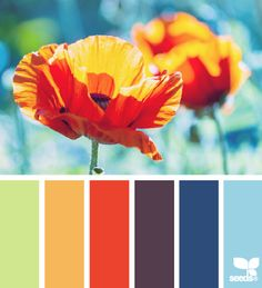 flora brights color palette from Design Seeds***Want this palette for my tiny house kitchen** Colour Pallette, Color Palate, Colour Schemes, Color Combos, Color Patterns, Color Harmony, Himmelblau, Design Seeds, Deco Design