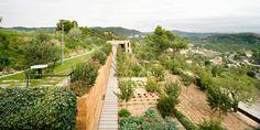 jardin_ecologico_Sant_Cristofol_dataAE_06