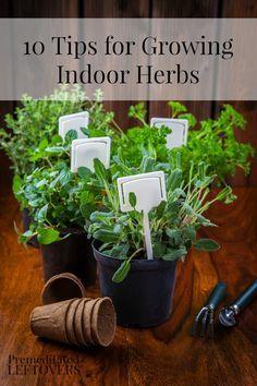 10 Tips for Growing Indoor Herbs - Here are 10 tips for growing indoor herbs to help you grow a successful indoor herb garden.