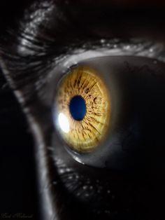 Eye . .