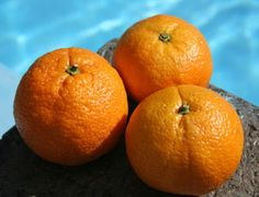 Improved Satsuma Orange Tree - Willis Orchard Company