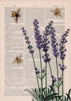 Wall art home decor Bees with Lavender flowers by PRRINT on Etsy