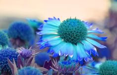 A personal favorite from my Etsy shop https://www.etsy.com/listing/261746652/bright-blue-flowers-8x10-glossy-print