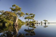 trees | Cypress Trees of Southwest Florida