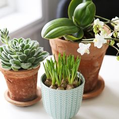Purodeco Feng Shui on Instagram #purodecohome #fengshui #greenplants