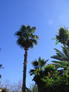 Who doesn't like palm trees?