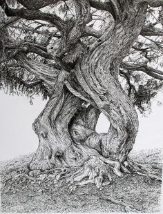 Sarah Woolfenden's very detailed pen-and-ink drawings of trees near her home in North Devon are quite magical,