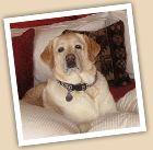 Dog Trekker http://dogtrekker.com/eastern_sierra/activities/dog-friendly-boat-rentals
