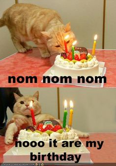 Birthday noms...