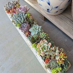 succulent care how easy is it to care for succulents - The world's most private search engine Succulent Landscaping, Succulent Gardening, Succulent Care, Garden Plants, House Plants, Outdoor Potted Plants, Balcony Plants, Pot Plants, Indoor Succulent Garden