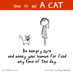 http://lastlemon.com/cats/cat262/ HOW TO BE A CAT: Be hungry 24/7 and annoy your human for food any time of the day.