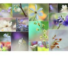 Frühling für die Sinne