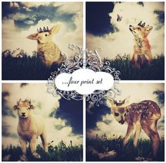Print Set - Little Prince - Four 4x6 Inch Prints from This Years Girl on Etsy for $32