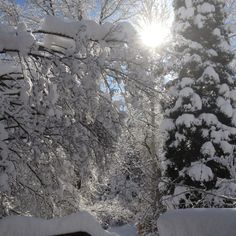 Snowy Sunday.