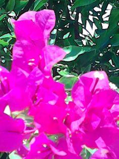 Hartie Flowers, Plants, Plant, Royal Icing Flowers, Flower, Florals, Floral, Planets, Blossoms