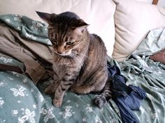 Today's cat on 1st May 2012 by ganchan2, via Flickr
