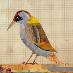 bird collage - Google Search