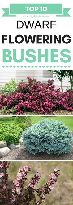 Dwarf bushes are ideal for decorating a garden bed, a patio or literally any corner of the garden, and depending on the variety, you can choose between different size and colors. We've already picked our ten favorites and we really would like to see which of these would you choose for your garden?