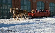 Winter horse and sleigh rides in Charlottetown PEI Horses In Snow, Meanwhile In Canada, Winter Horse, Sleigh Rides, Atlantic Canada, Prince Edward Island, The Fam, New Brunswick, Newfoundland