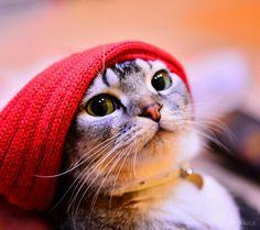 Me parece que veo un lindo gatito