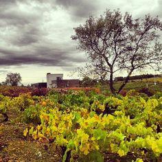 El otoño y sus colores #mencia #bierzofilia #viñedo #instabeauty #otoño #vino #losada #winelovers #enoturismo #visits #bierzo