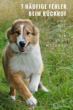 #Hund || #Hunde || Rückruf || Erziehung Gedanken || Tipps || Tricks || Ideen || Bilder || Fehler vermeiden