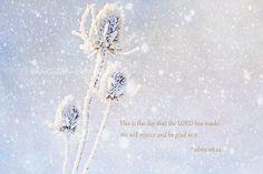 Nature Magic Winter Frozen FlowersSnow by KnowGodThroughArt, $30.00