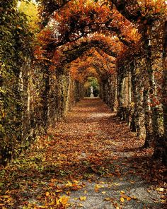 Autumn at Birr Castle, County Offaly Ireland.