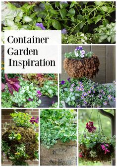 810 Best Container Gardening Images In 2020 Container Gardening
