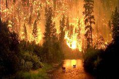 Montana    Forrest fire