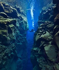 Diver Alex Mustard took this shot while diving near Iceland; about 25 meters (82 feet) deep, between the North American and Eurasian tectonic plates.