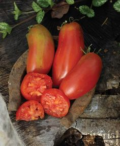 San Marzano Gigante 3 Tomato - One of the best tasting paste tomatoes
