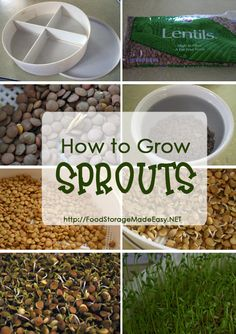 to Grow Sprouts My adventures in learning how to grow sprouts. I started with lentil sprouts and…My adventures in learning how to grow sprouts. I started with lentil sprouts and… Growing Sprouts, Growing Microgreens, How To Grow Sprouts, Organic Gardening, Gardening Tips, Container Gardening, Kitchen Gardening, Commercial Aquaponics, Sprouting Seeds