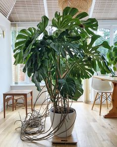38 Pretty and Easy House Plants Decor Ideas - How to Make Use Of Artificial indoor Plants & Trees To The Home Projects