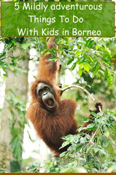 You travel to Borneo