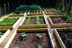 How to Garden Vegetables | Gallery of How to Start a Vegetable Garden in Our House