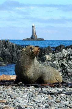 Leaning Lighthouse (Seal Coast Safari), Wellington, New Zealand #travelnewhorizons