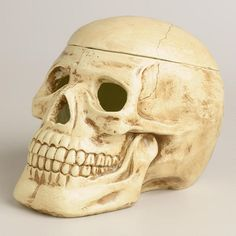 Paper Pulp Skull Container at Cost Plus World Market - Remove the top of our Paper Pulp Skull Container for space to store all your creepiest trinkets. >> #WorldMarket Halloween #HalloweenDecor #HalloweenEntertaining