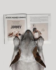 thank you @talkmagazinemiami for such a kindness article. Jimmy loved! . valeu @talkmagazinemiami por uma materia linda. Jimmy amou!