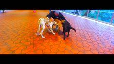 #Dog Obedience #Trainer #Houston #Texas | Dog Training Houston TX - For the best Dog Obedience #Trainer in Houston Texas call Off Leash K9 Dog Training. For Dog Board and Trainer in Houston TX contact Off Leash K9.