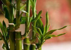 Feng Shui: plantas que atraem boas energias para o seu lar