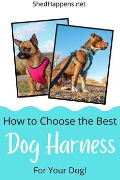 Are you facing challenges while training your dog to walk on leash? One of the most important leash training steps you can take is selecting the best dog harness for your dog. This includes determining the style of dog harness you and your dog prefer, sizing your dog's harness, understanding the unique dog training requirements for that harness and more. In this article, I share how to find the best no pull dog harness products for your pup. Leash Training, Training Your Dog, Puppy Care, Dog Care Tips, Outdoor Dog, Dog Harness, Dog Supplies, Best Dogs, Picture Video