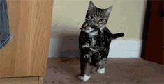 Cat Carrying Kitten Cute Cat Gif